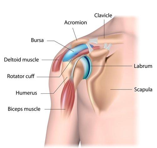 Shoulder anatomy for arthroscopy.jpg